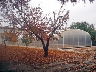 Poolüberdachung LAGUNA mit hellen Alu-Profilen passt perfekt zu der Herbstumgebung
